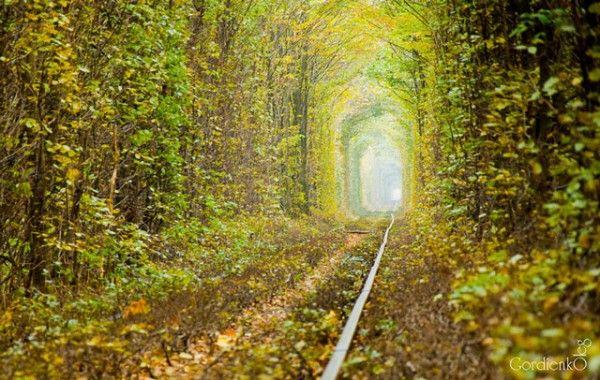В «Тунелі кохання» на Рівненщині зупинили вирубку дерев