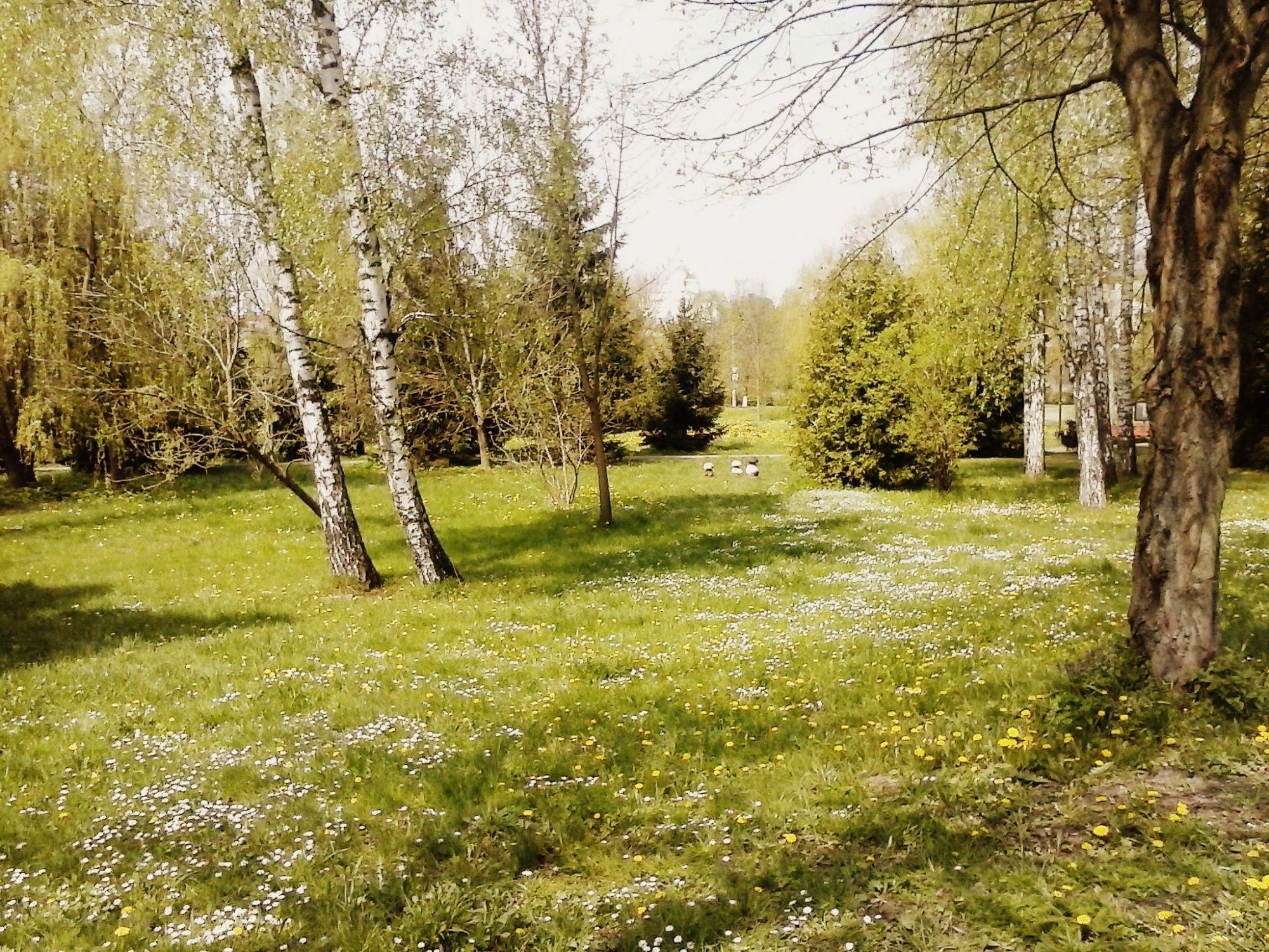 Весна завітала в різні куточки Луцька