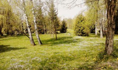 Весна завітала до Луцька
