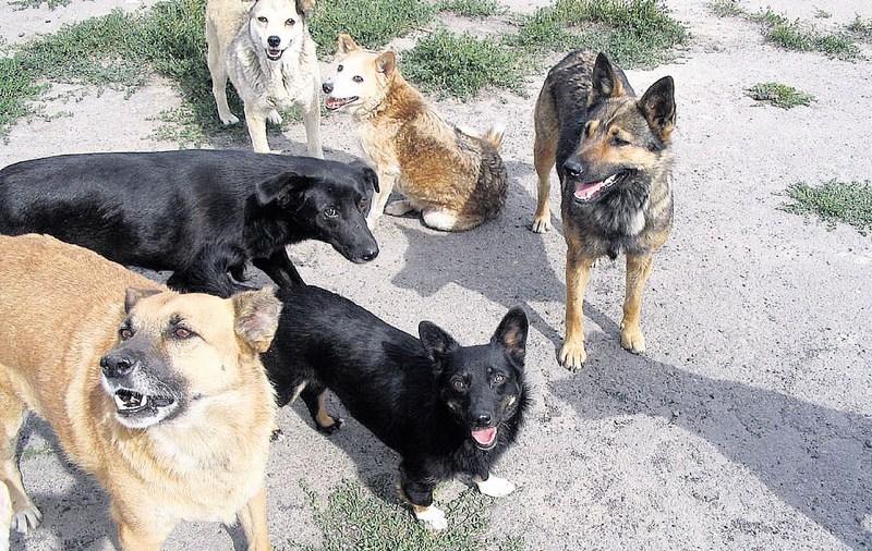 У Львові підраховують безпритульних собак