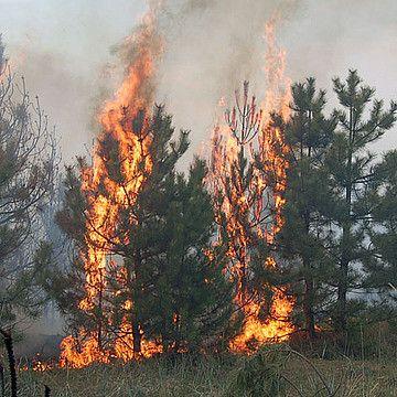 На Рівненщині (Володимирецький район) горять ліси