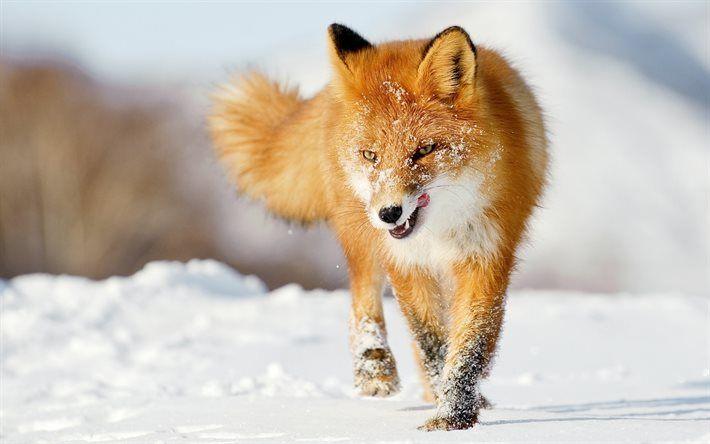 Застрелив лисицю