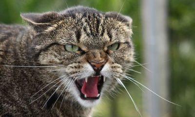 На Рівненщині скажений кіт покусав жінок