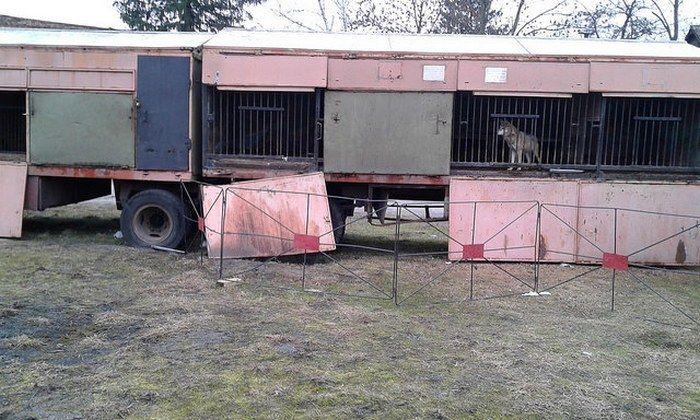 Пересувний зоопарк помирає від голоду на Рівненщині