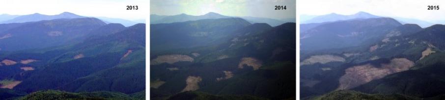 Вирубка лісів призведе до катастрофи у Карпатах