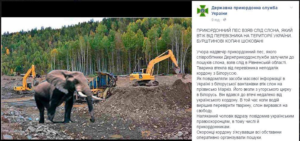 Рівненські прикордонники виявили сліди зниклого слона