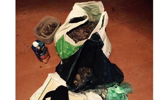 На Рівненщині поліція знайшла 20 кілограм бурштину