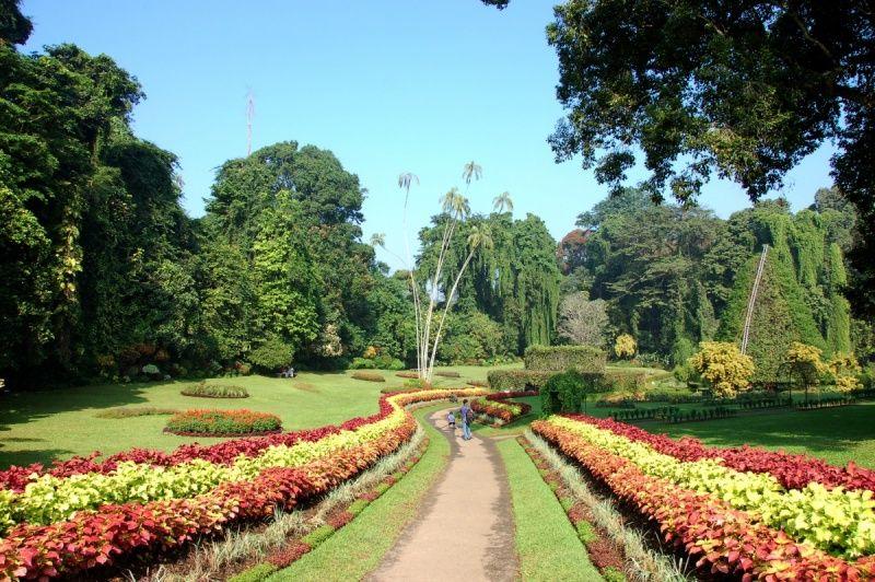 У Луцьку хочуть створити ботанічний сад