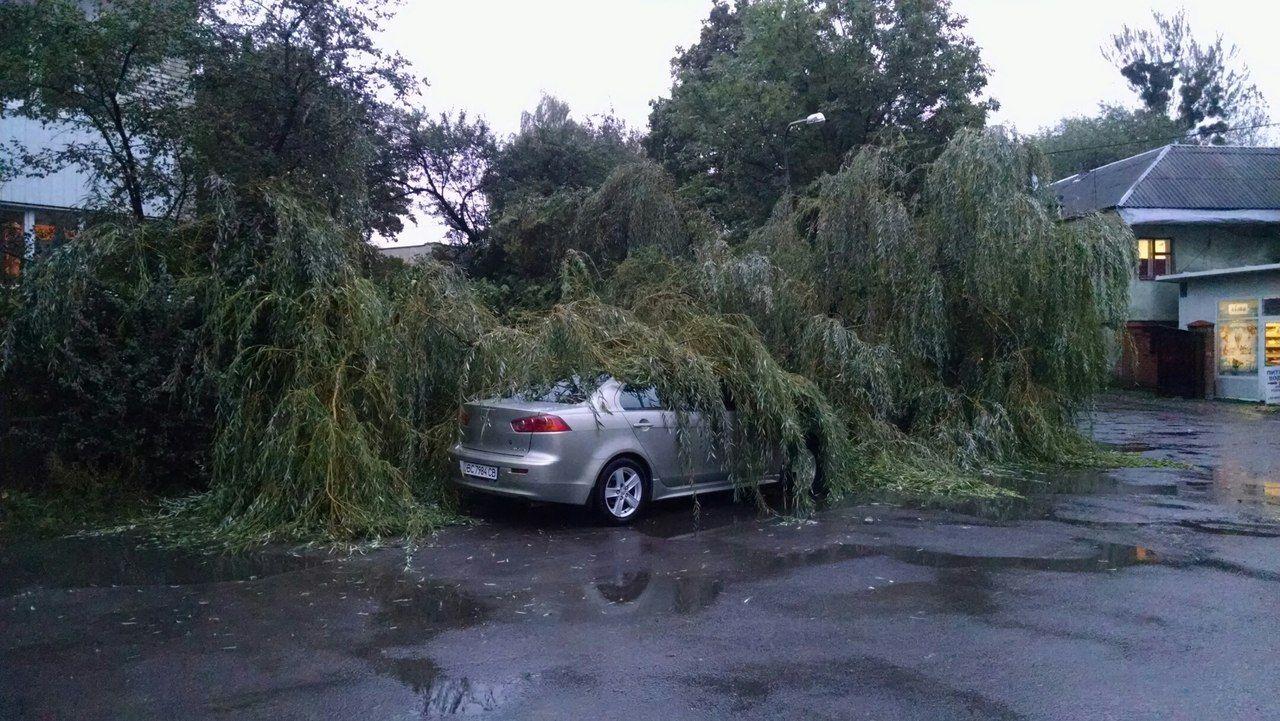 Во Львове дерево упало на автомобиль (фото)