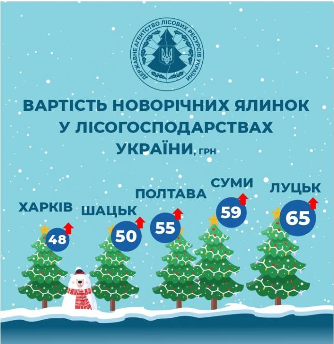 Яка ціна ялинки в Рівному, Луцьку та інших обласних центрах Західної України?